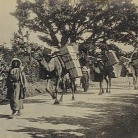 ענבי חברון על גמלים בדרך ליקב 1930